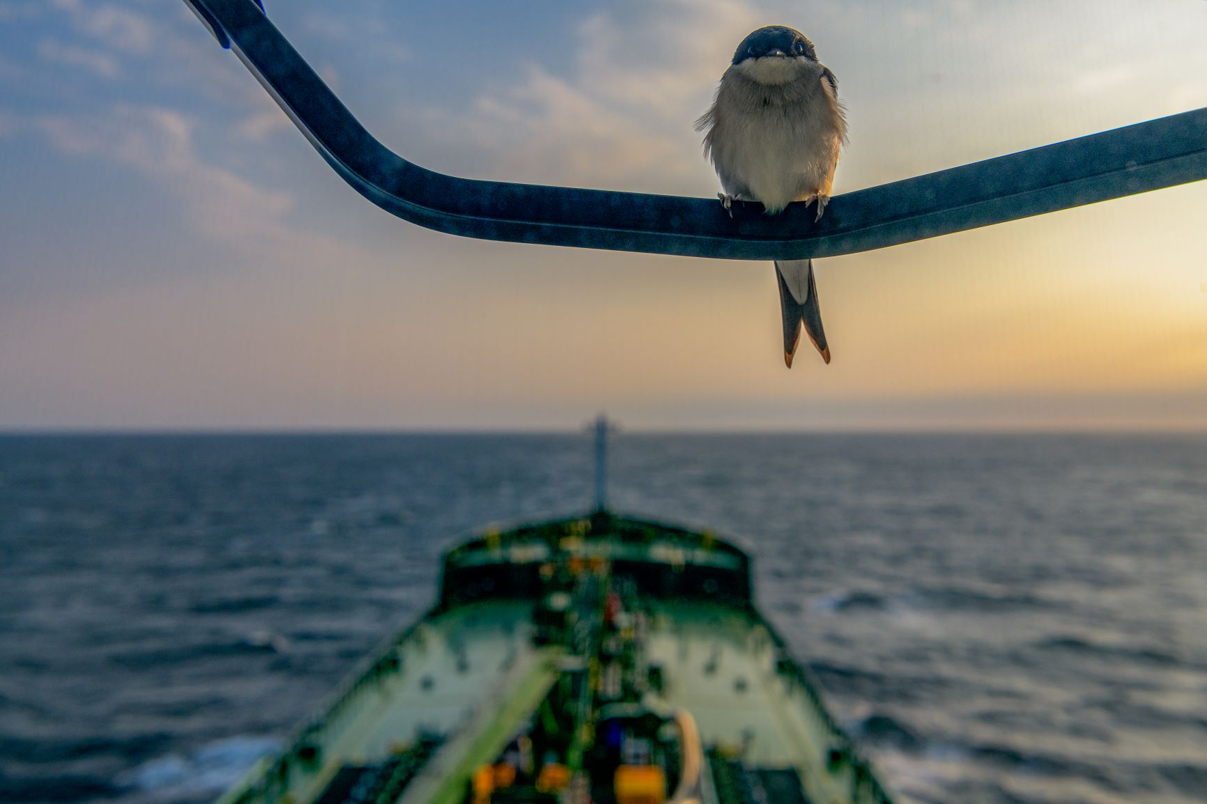 Bird on tanker